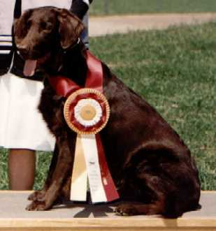 1998 National Specialty - 1st Field Bitches