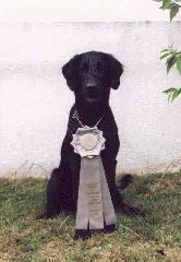 1998 MD Sporting Dog Match - Group IV
