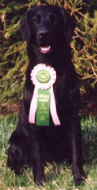 1999 CRFCRC Match - Best Puppy